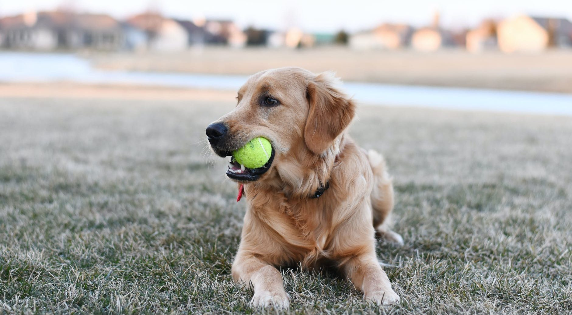 A-Z of dog wellbeing: Balls!