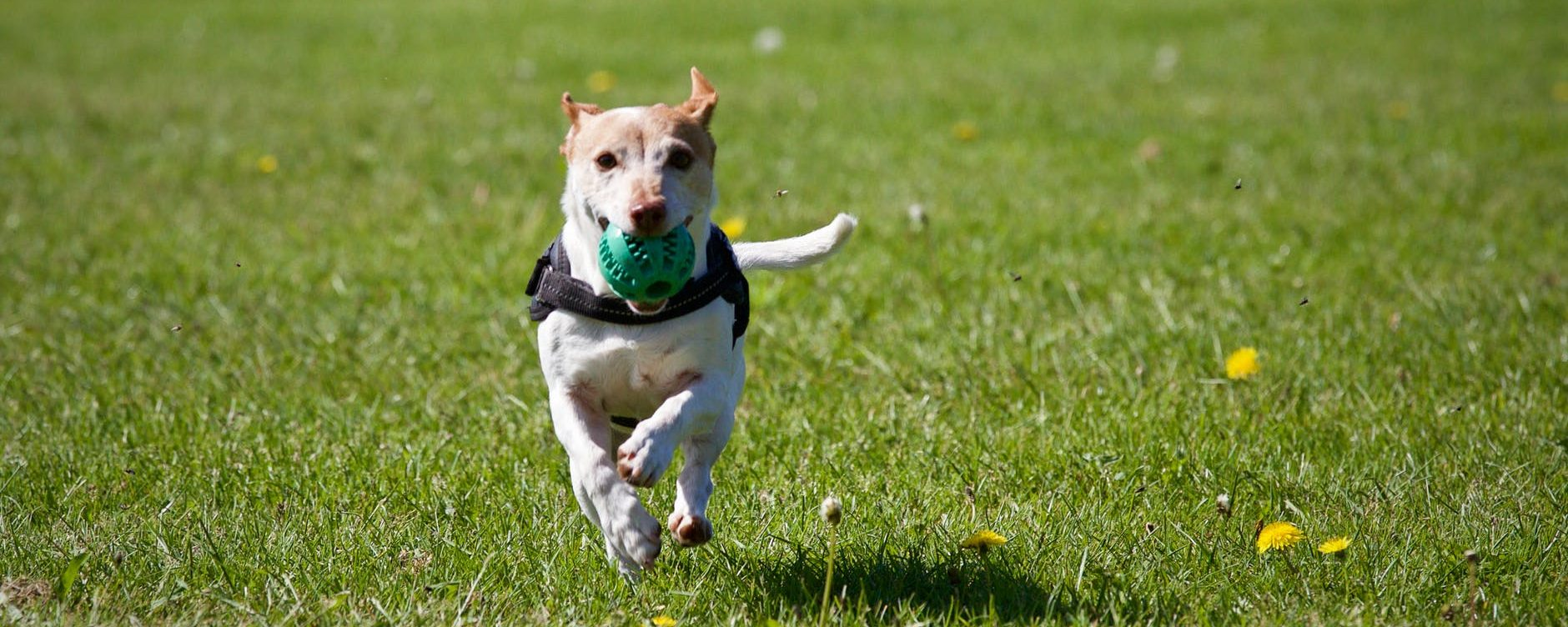 A-Z of dog wellbeing: Exercise