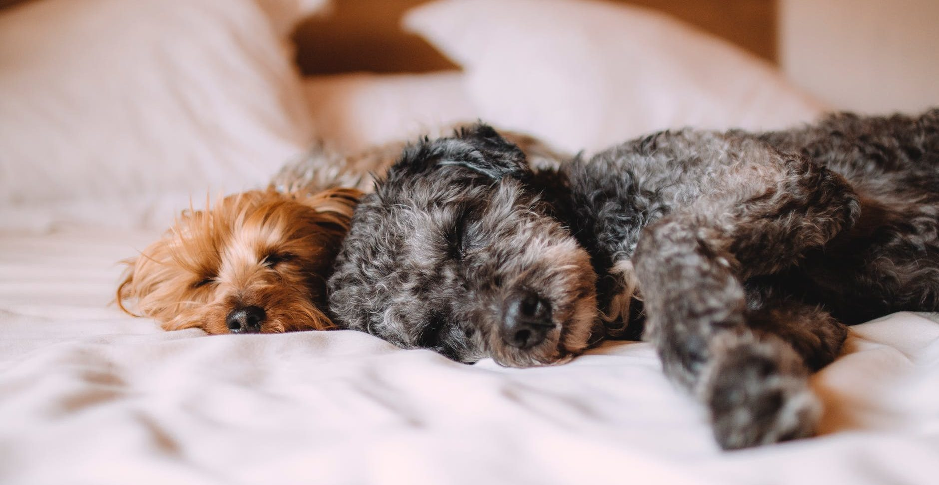 A-Z of dog wellbeing: Quiet time and sleep